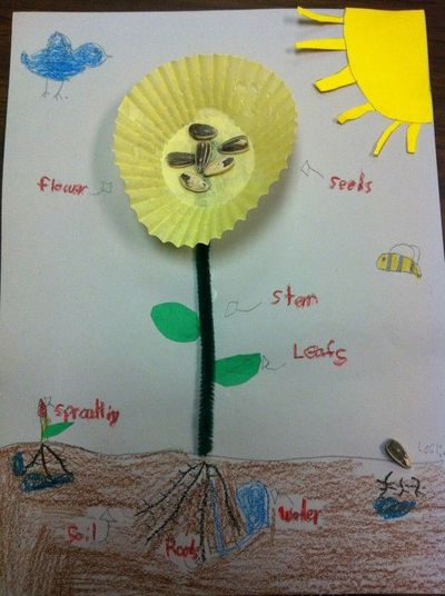 cute activity for labeling parts of a plant preschool