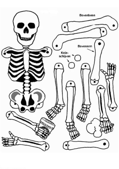 coloring page Human body - Human body