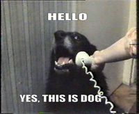 I love talking to dogs on the phone