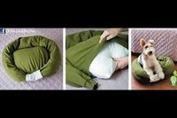 DIY Dog Bed! Use an old sweatshirt and a bed pillow.