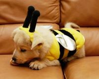 BUMBLE PUPPY!!