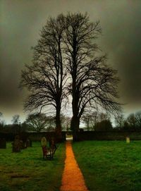 Lone tree stands...