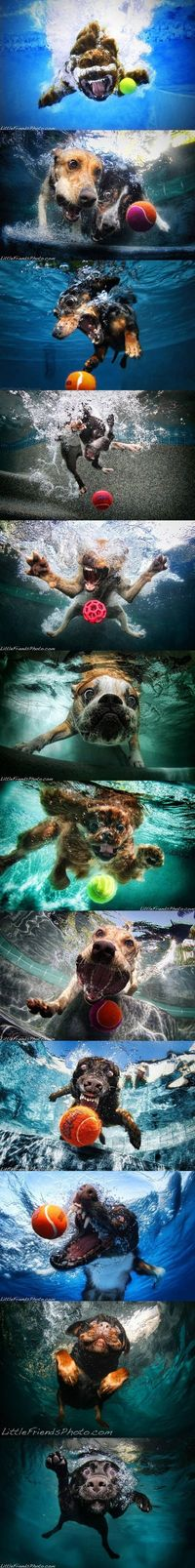Doggies under water :)