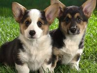 The one on the right has eyebrows! :D