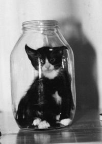 cat in a bottle