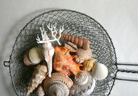 edible chocolate filled candy seashells- cake topper