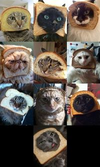 Cat breading never gets old [: