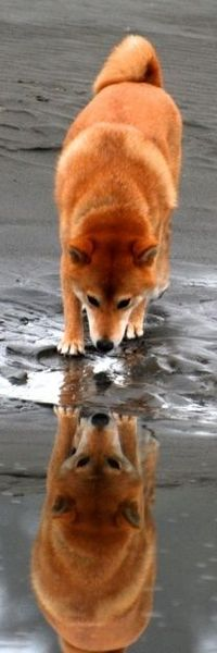 �™� Drinking reflection