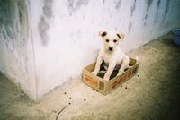 pup pup pup! in a box!