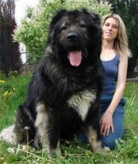 Favorite Large Dog Breeds