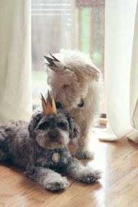 toilet paper tube crowns