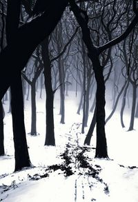 into the cold forest