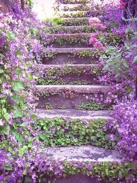 Lilac stairways leading to beautiful gardens...